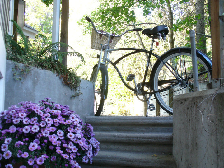 bike and asters photo