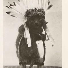 decolonize cat